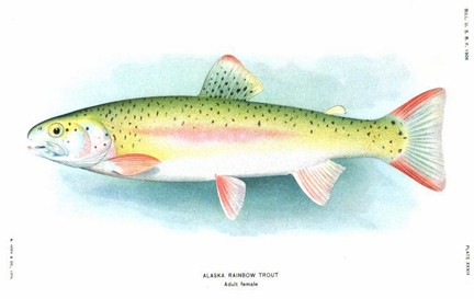 Fishes of Alaska by Evermann for sale.