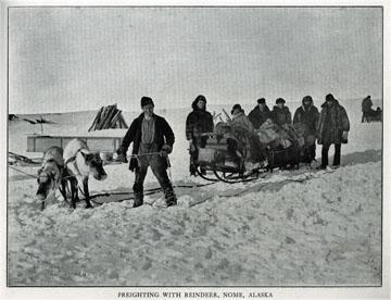 "Freighting with reindeer, Nome, Alaska. For sale:               original view book ""Souvenir of North Western               Alaska"" by O.D. Goetz."