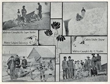 "Walrus caught at Cape Yorke [Cape York], Alaska. For               sale: original view book ""Souvenir of North Western               Alaska"" by O.D. Goetz."