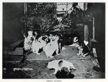 "Siberia huskies [Siberian huskies]. For sale:               original view book ""Souvenir of North Western               Alaska"" by O.D. Goetz."