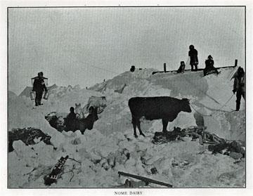 """Nome dairy. For sale: original view book               """"Souvenir of North Western Alaska"""" by O.D.               Goetz."""